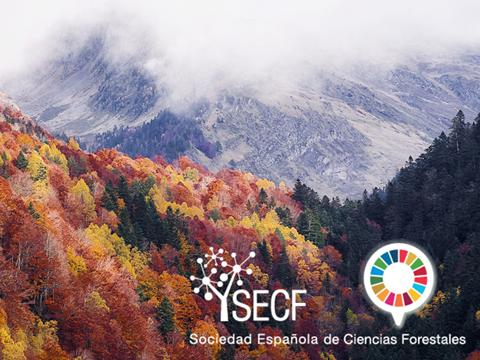 Se aplaza a septiembre de 2021 la celebración del 8º Congreso Forestal Español Cesefor